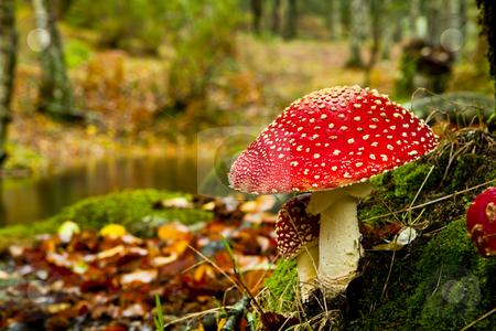 Cogumelos crescem no pulmão de agricultor