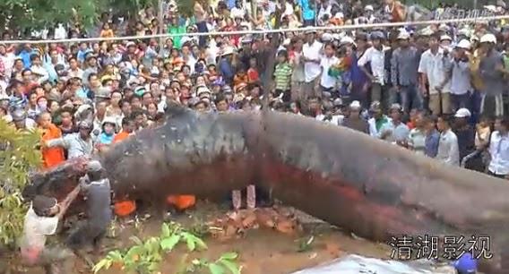 Criatura gigante não identificada é içada no Vietnão