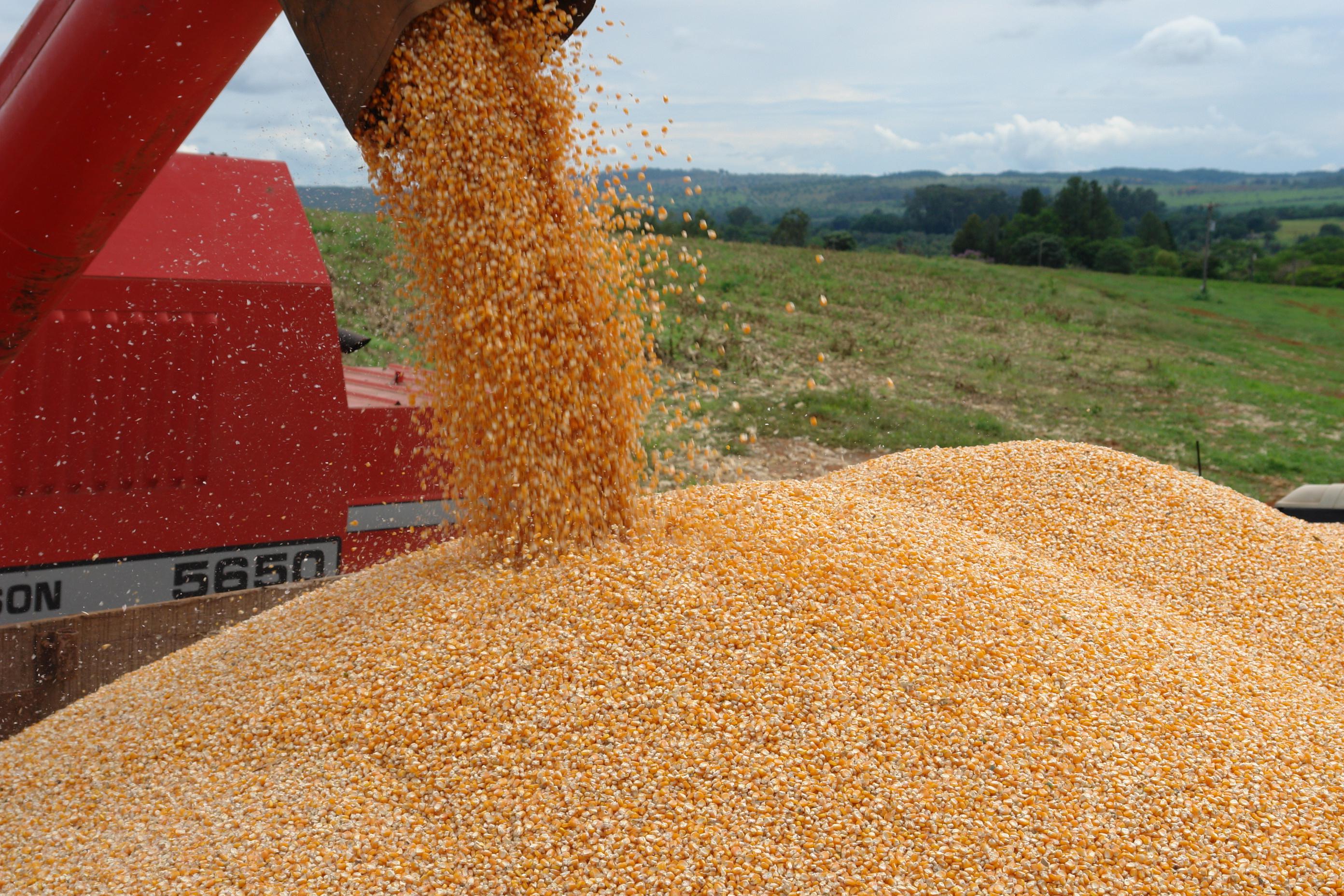 Mais da metade da safra nacional de grãos é produzida em quatro estados