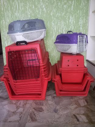Animais de rua serão castrados em Morro da Fumaça