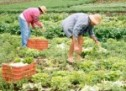 Agricultores familiares vão receber R$ 8,8 milhões em outubro