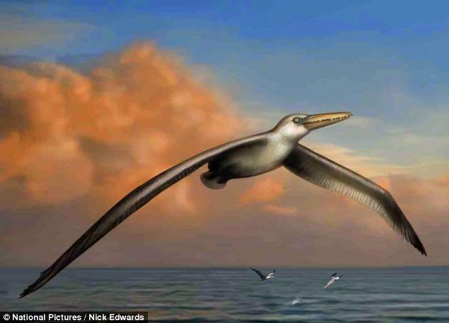 Cientista descobre fóssil de maior pássaro do planeta, com asas de 7 metros