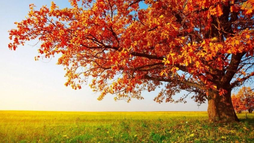 FUMAF realiza distribuição de mudas em alusão ao Dia da Árvore