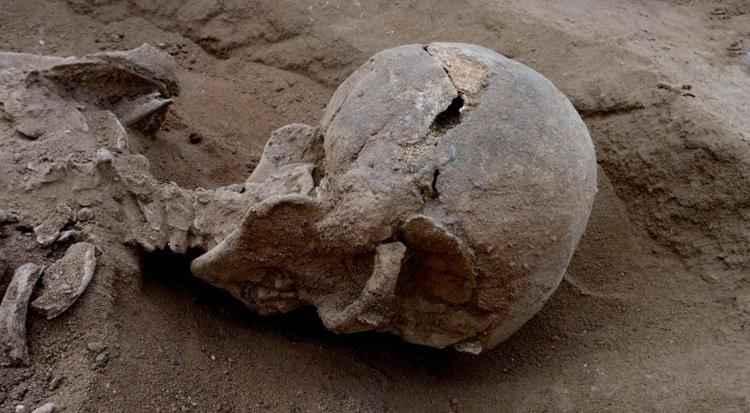Fósseis reforçam tese de que agressividade é característica do Homo sapiens