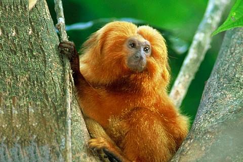 Governo estuda ampliar Bolsa Verde para proteger animais ameaçados de extinção