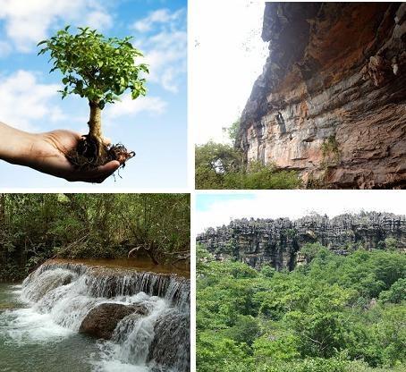 Codevasf fornece mudas e sementes para reflorestamento em MG