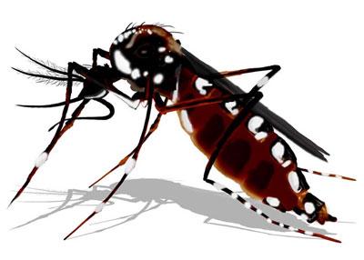 Vinte estados recebem R$ 30,4 milhões para combater Aedes aegypti