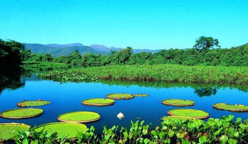 Pesquisadora brasileira reforça grupo internacional sobre biodiversidade