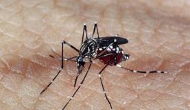 Agência da ONU de energia atômica discute combate ao Aedes em reunião no Brasil