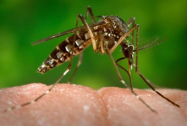 Embrapa apresenta bioinseticida capaz de matar larvas do Aedes aegypti