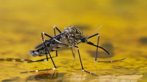 Vacinação é ferramenta mais eficaz contra a febre amarela