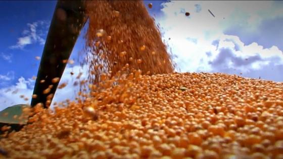 Exportação de produtos agro dispara: entenda por que o Brasil está no topo do mundo quando se fala em produção de alimentos