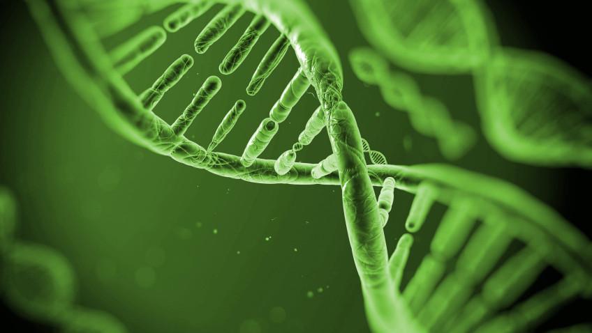 Identificação do DNA de árvores contribui para a preservação da Amazônia