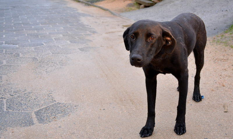 Parceria com ONG amplia número de castração e auxilia no controle de animais de rua