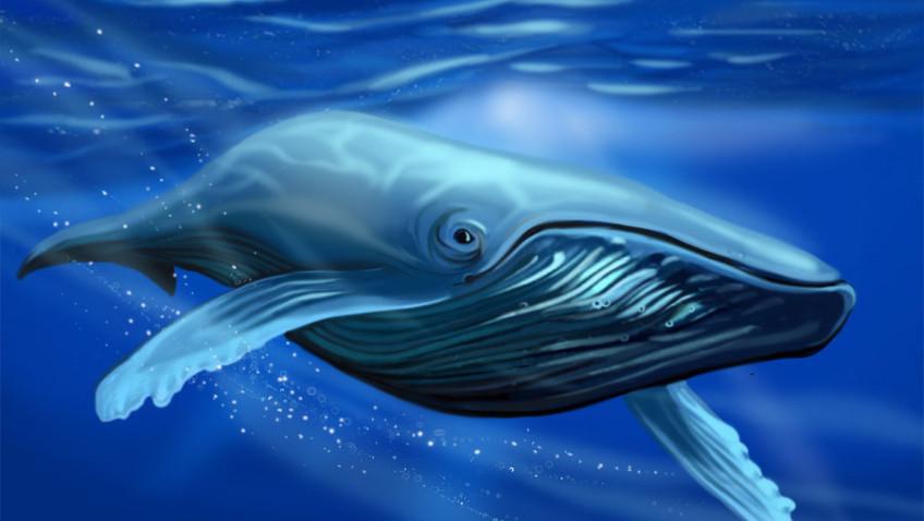 Assinado pelo Brasil, documento reforça proteção às baleias