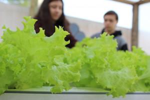 """Projeto """"Escola Empreendedora"""" fará venda de orgânicos hoje (sexta-feira)"""