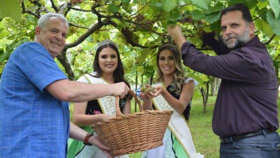 12ª Vindima Goethe abre oficialmente com colheita simbólica