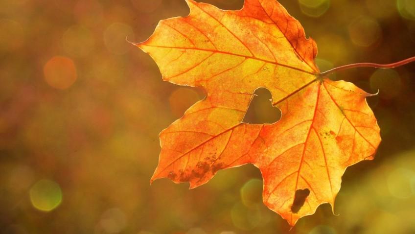 Outono: como cuidar da sua saúde nessa estação?